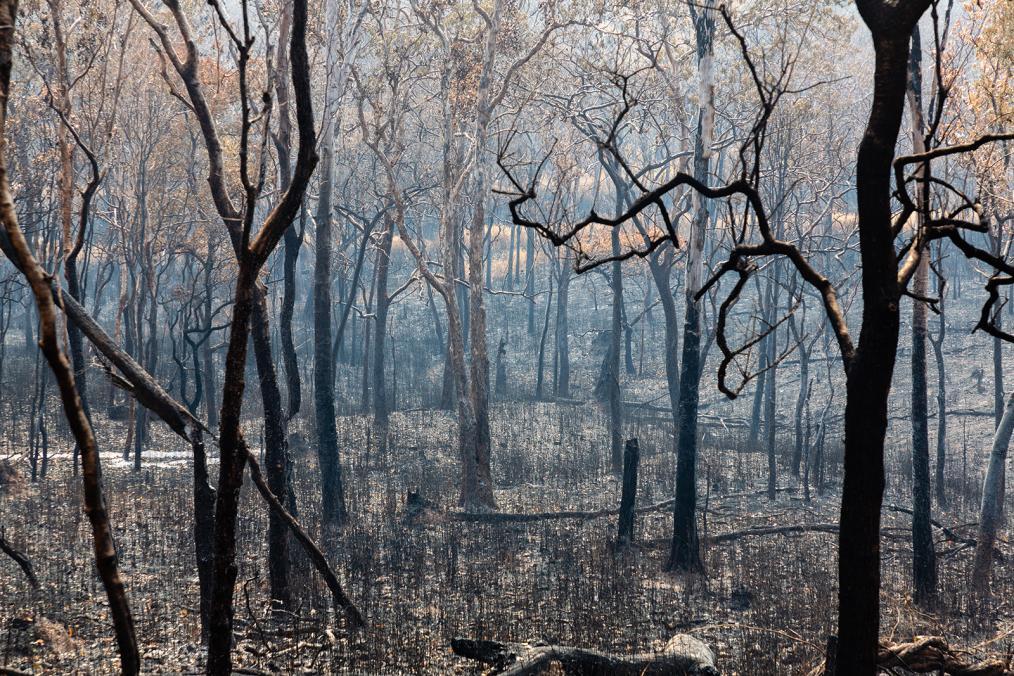 Cambodia Burning