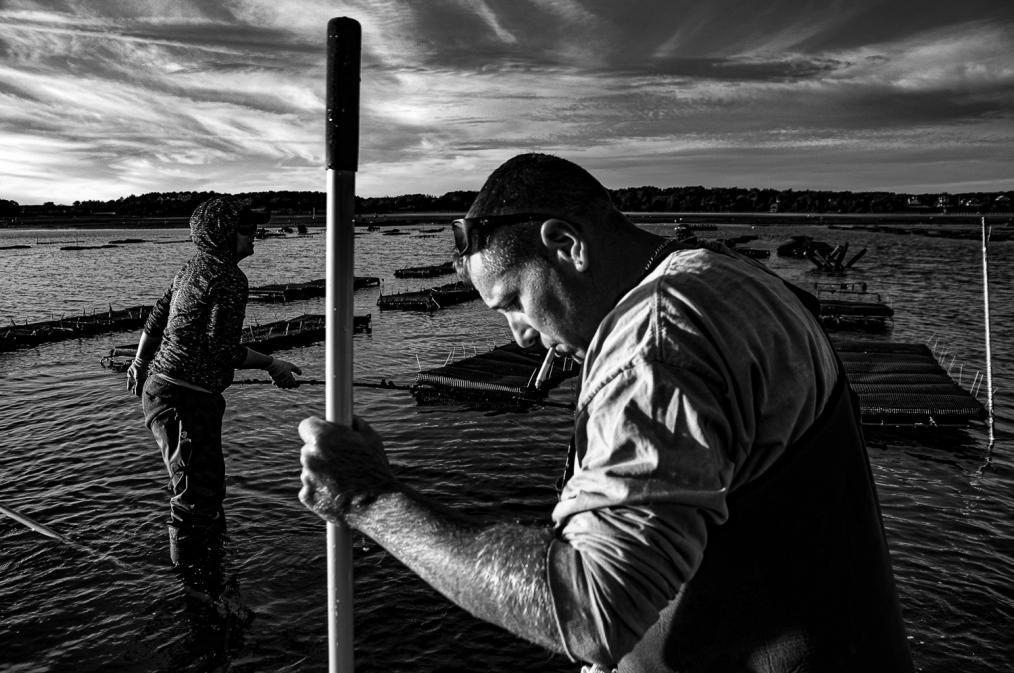 A Tide of Uncertainty: Shellfish Farming in Wellfleet