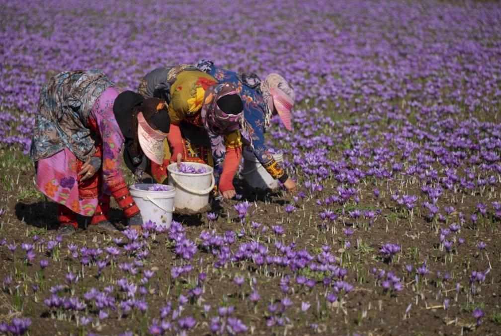 Iranian Saffron story