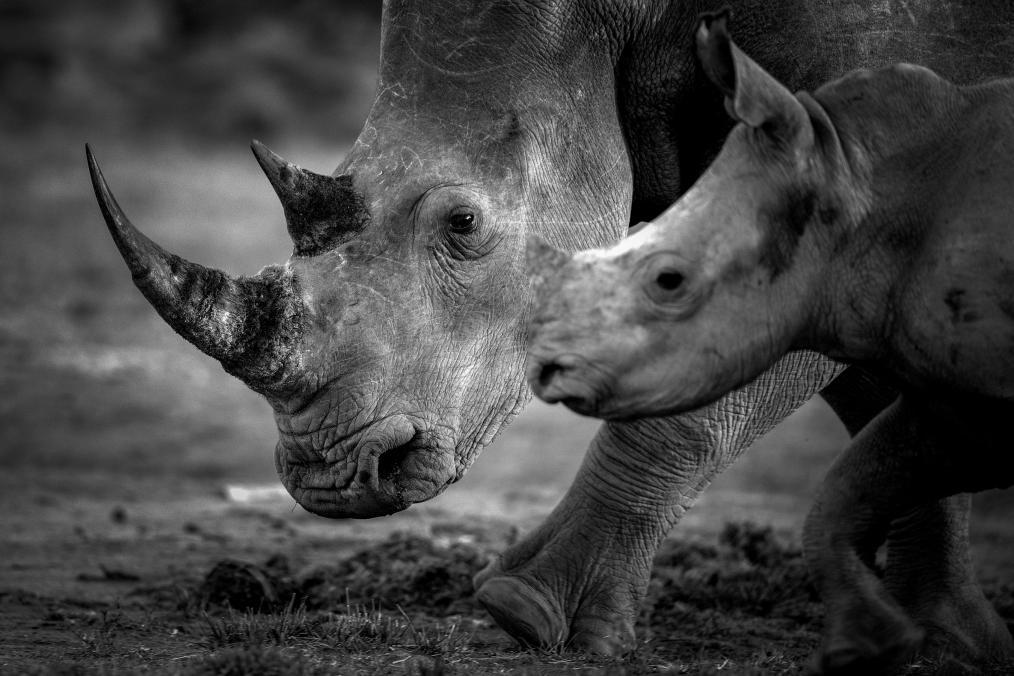 Sixth mass extinction of wildlife accelerating.